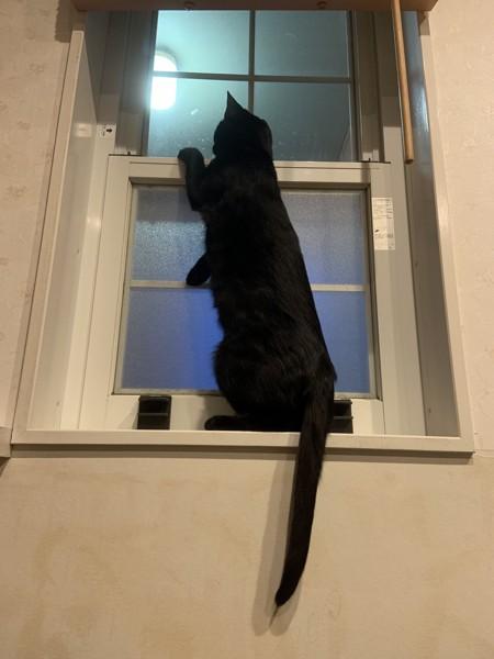 猫 黒猫 あんこの写真