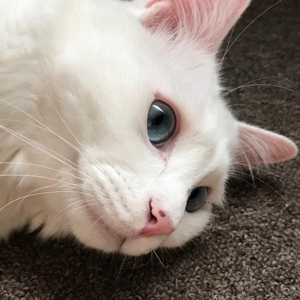 猫 雑種(ミックス) サクの写真