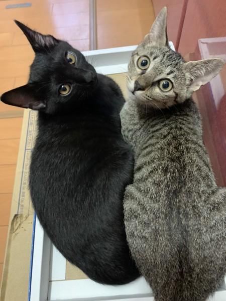 猫 キジトラ メルの写真