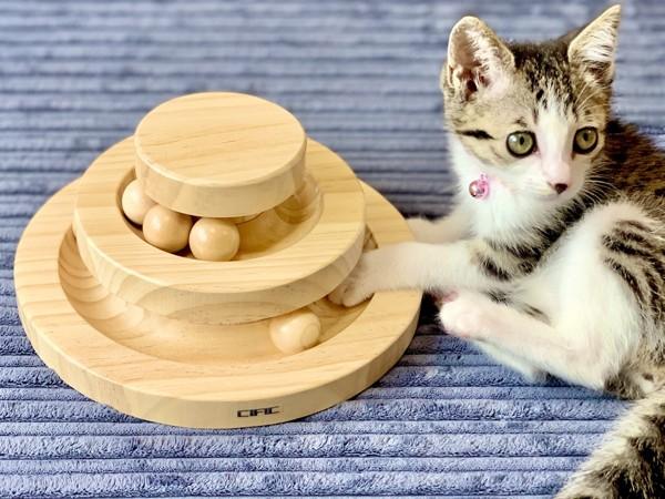 猫 サバトラ つくしの写真
