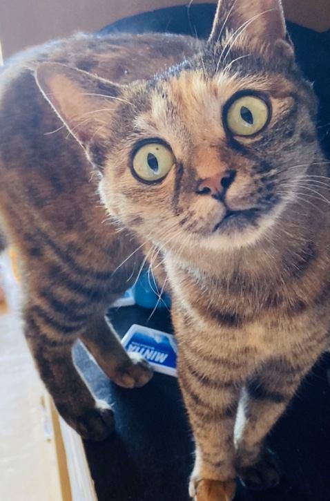 猫 雑種(ミックス) まりちゃんの写真