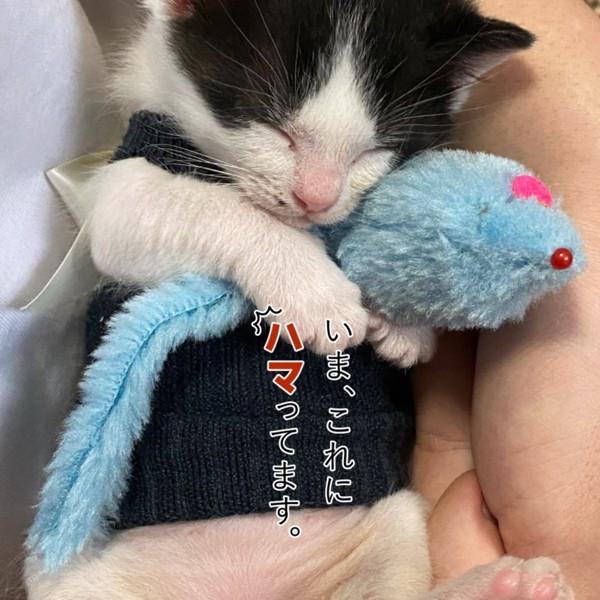猫 雑種(ミックス) ほくろの写真