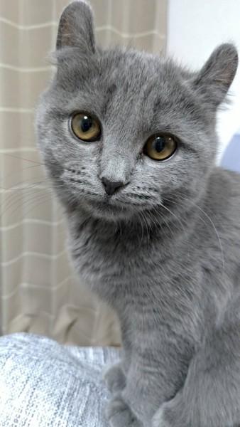 猫 キンカロー メイメイの写真
