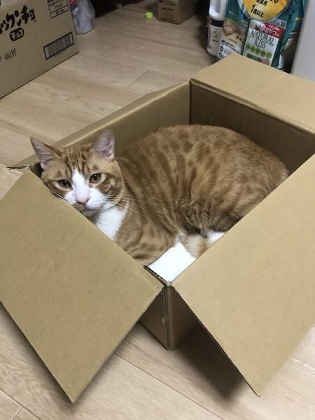 猫 三毛猫 政宗の写真