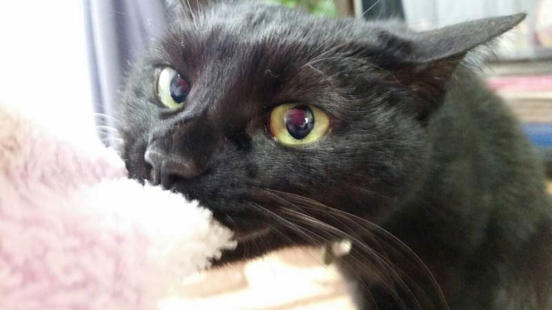 猫 雑種(ミックス) こたろうの写真