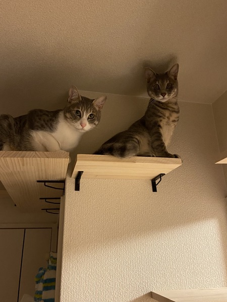 猫 MIX ソルト&シュガーの写真