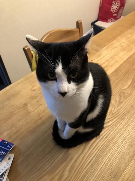 猫 雑種(ミックス) モカの写真