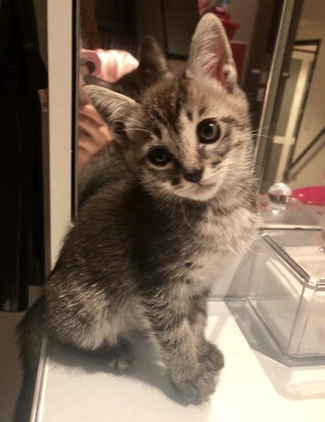 猫 雑種(ミックス) ねねちゃんの写真