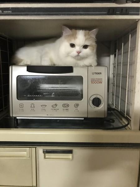 トースターの上でぬくぬくする猫