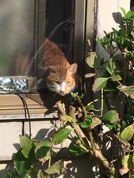 猫 雑種(ミックス) れんの写真
