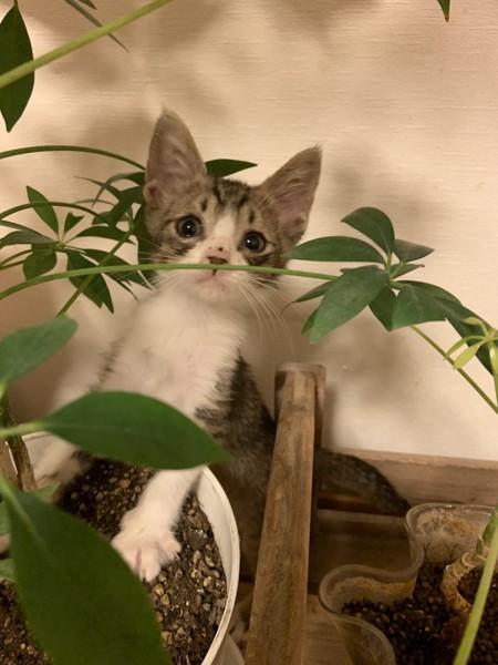 猫 不明 あむの写真