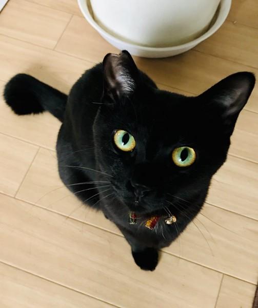 綺麗な色の黒猫の目