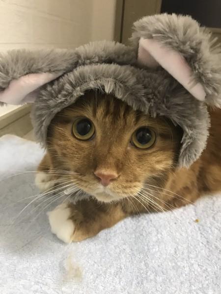 猫 雑種(ミックス) ルルの写真