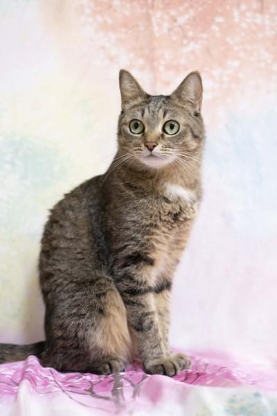 猫 キジトラ ゆずの写真