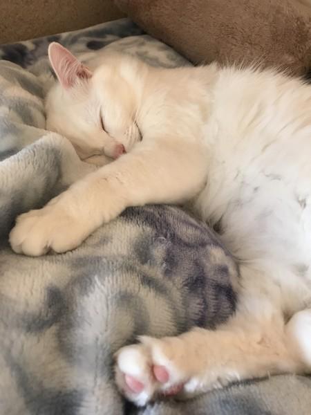 猫 雑種(ミックス) オチビの写真