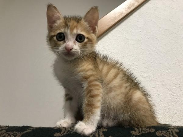 猫 雑種(ミックス) るかにゃんの写真