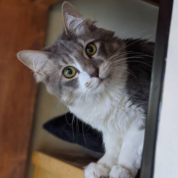 猫 雑種(ミックス) アポロの写真