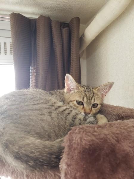 猫 キジトラ ももの写真