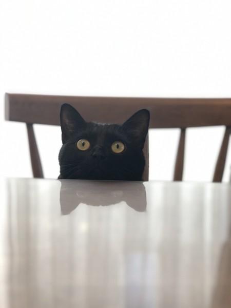 猫 黒猫 蒼空の写真
