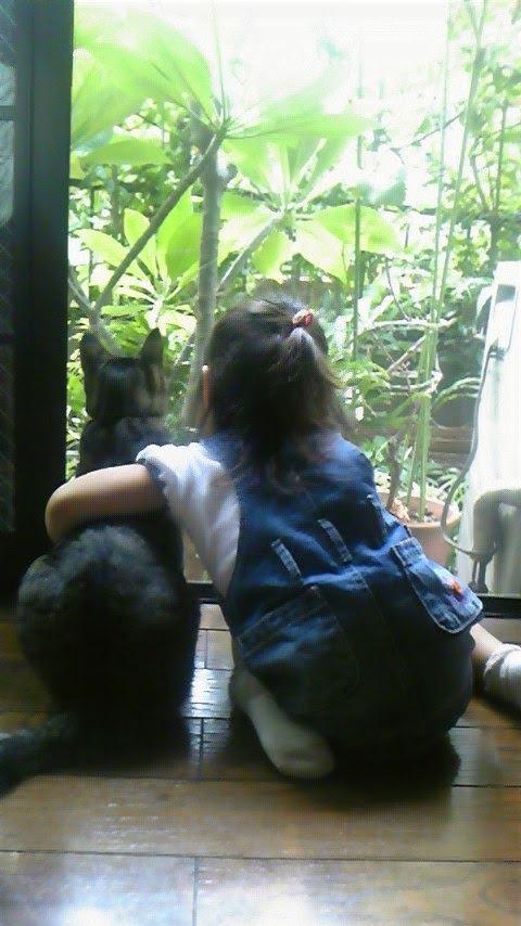 猫 キジトラ りきの写真