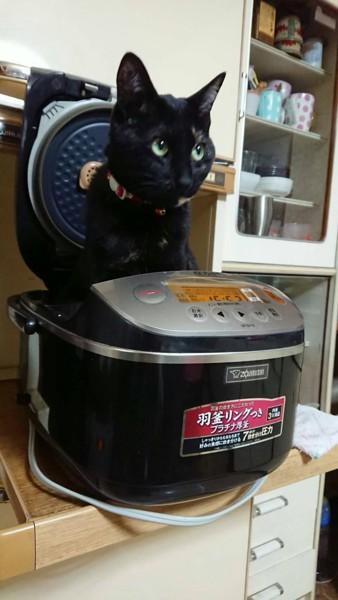 猫 サビ猫 あんちゃんの写真