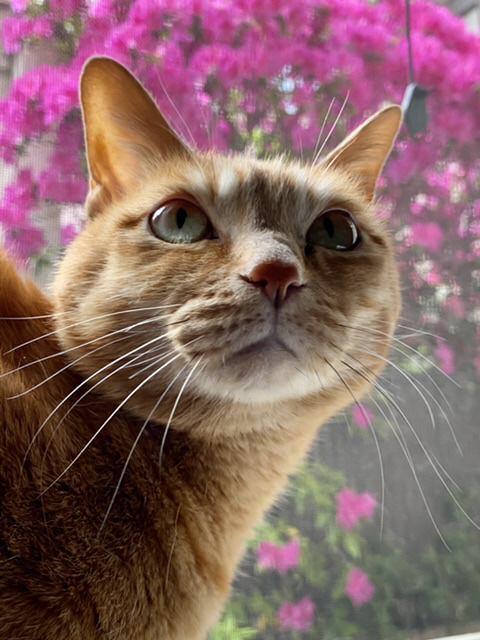 猫 雑種 ミコトの写真