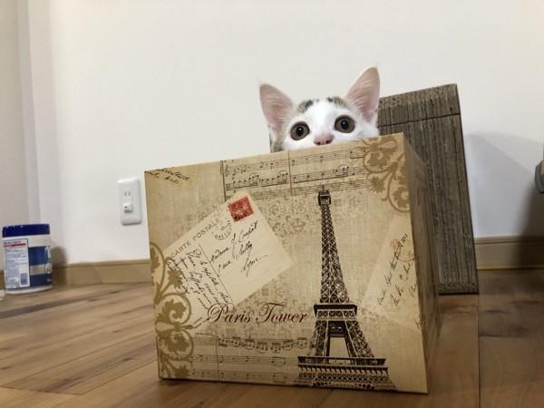 猫 雑種(ミックス) ソルの写真