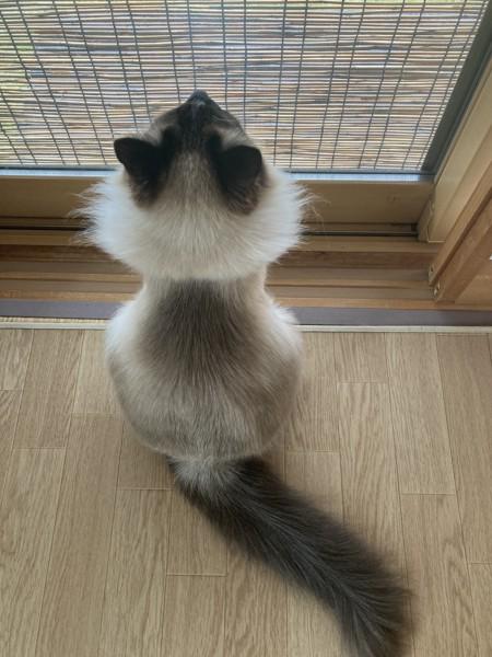 猫 雑種(ミックス) メルの写真