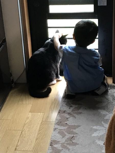 猫 雑種 クロロの写真