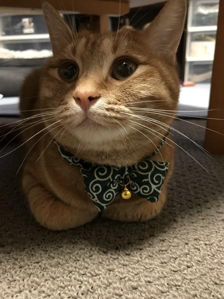 テーブルの下から見上げる猫