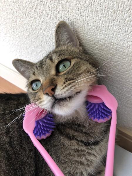 猫 雑種(ミックス) ぴーの写真