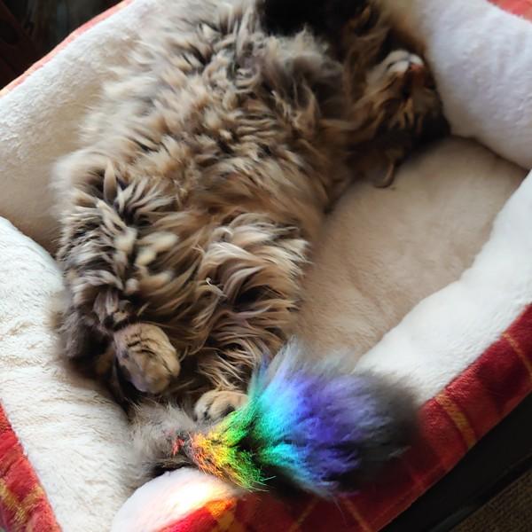猫 キジトラ レオンの写真