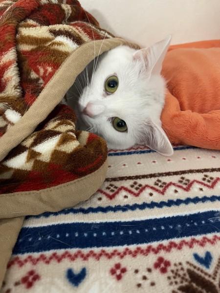 猫 雑種(ミックス) ルナの写真
