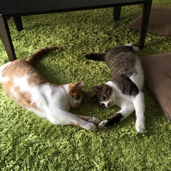 猫 雑種(ミックス) ピーク&アイゼンの写真