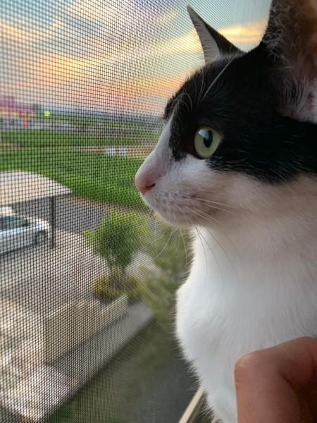 猫 雑種(ミックス) みーの写真
