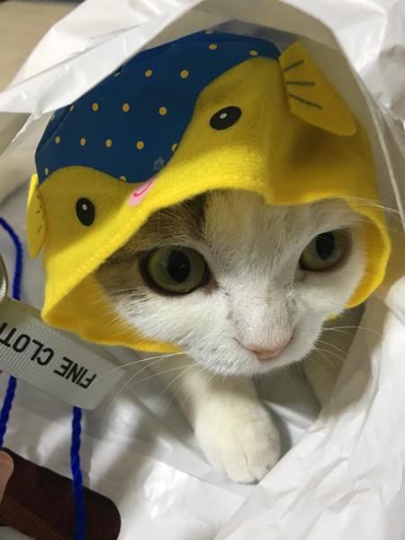 魚のコスプレをした猫