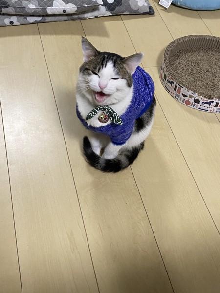 猫 サバシロ 鈴空の写真