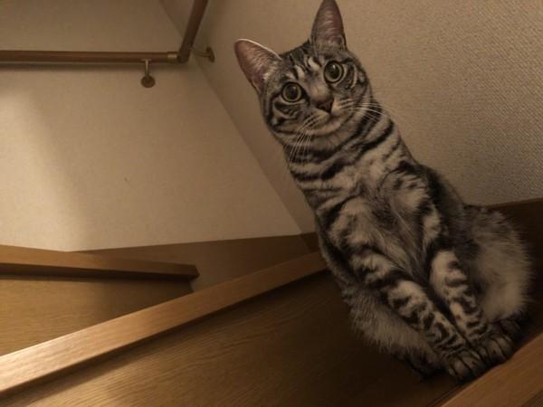 猫 雑種(ミックス) かりんの写真