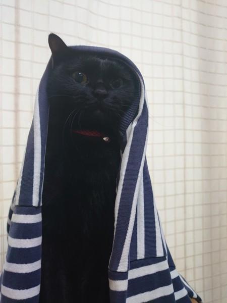 猫 黒猫 はなの写真