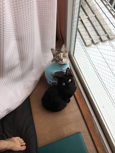 猫 ミックス まりもとメッシの写真
