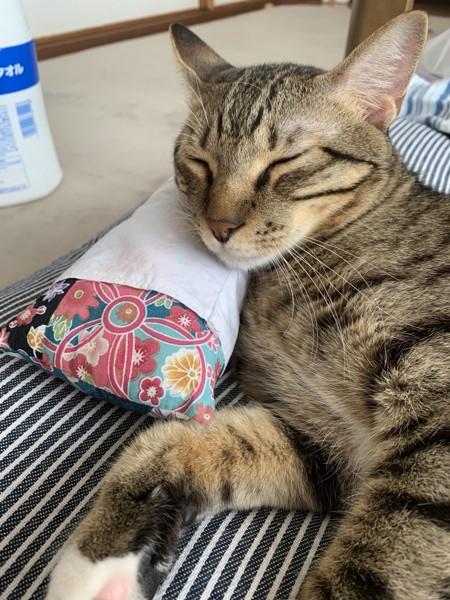 猫 雑種(ミックス) コテツの写真
