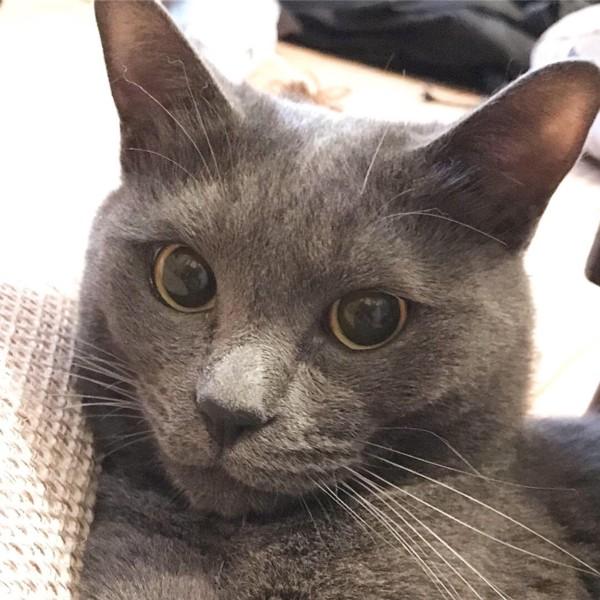 猫 雑種(ミックス) ぎんちよの写真