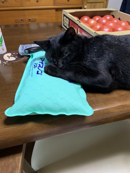 猫 黒猫 クロの写真