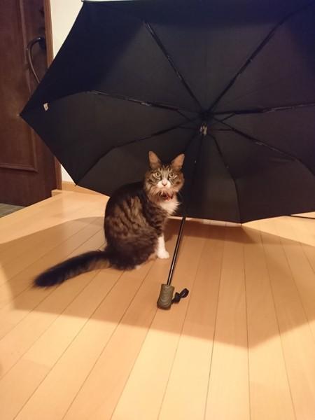 猫 雑種(ミックス) のんちゃんの写真