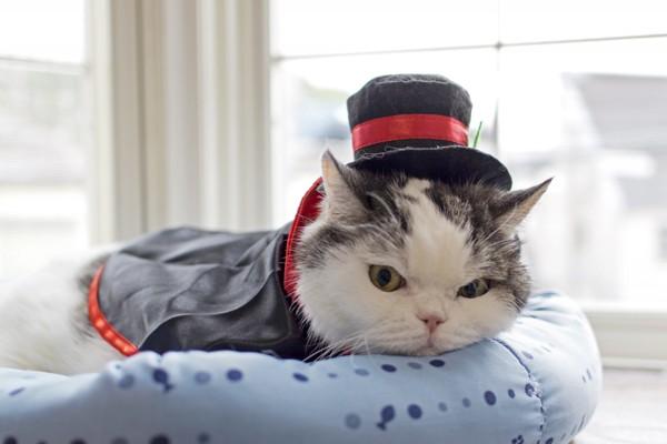 猫 雑種(ミックス) ぶーにゃんの写真