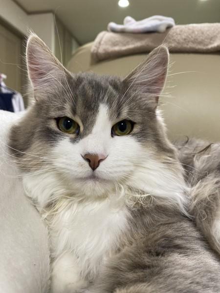 猫 雑種(ミックス) ルークの写真