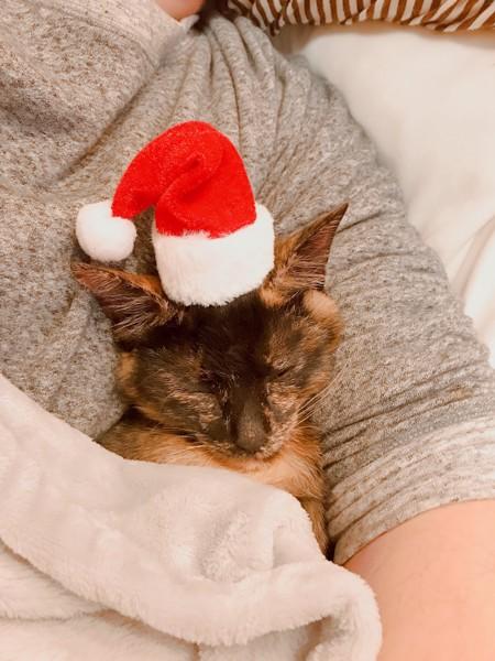 サンタ帽子のニャンコ