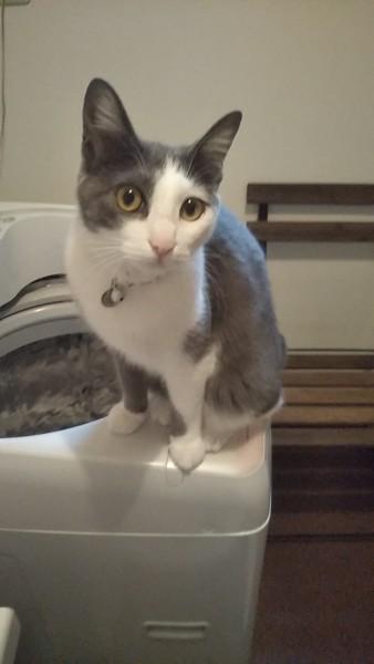 猫 雑種(ミックス) ちびの写真