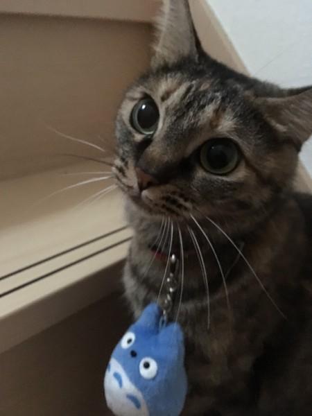 猫 雑種(ミックス) かぐらの写真