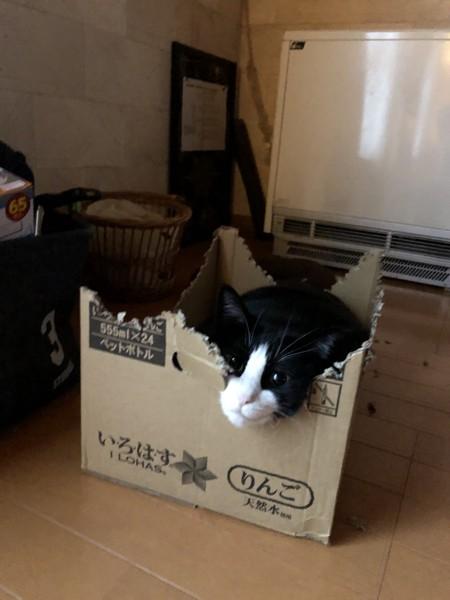 猫 雑種 ダビちゃんの写真